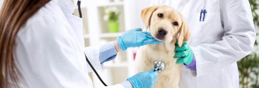 Devenir auxiliaire de santé animale