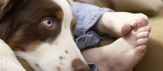 giardiose du chien